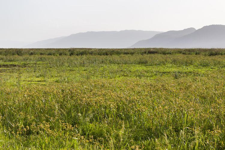 le lac manyara