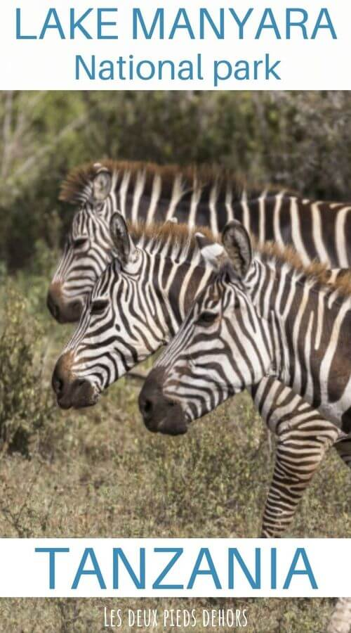 manyara park tanzania