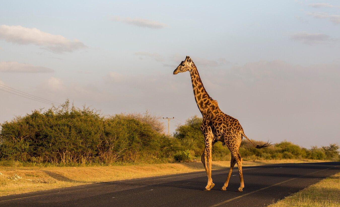 matériel pour safari photo et équipeme,nt