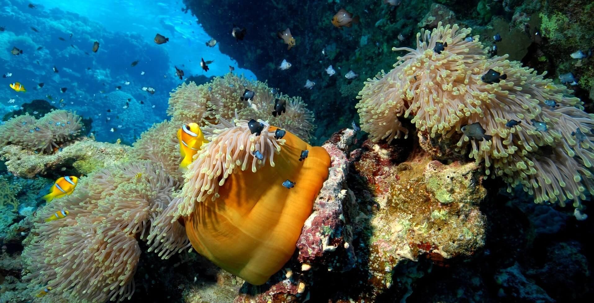meilleure saison pour la plongée en polynésie
