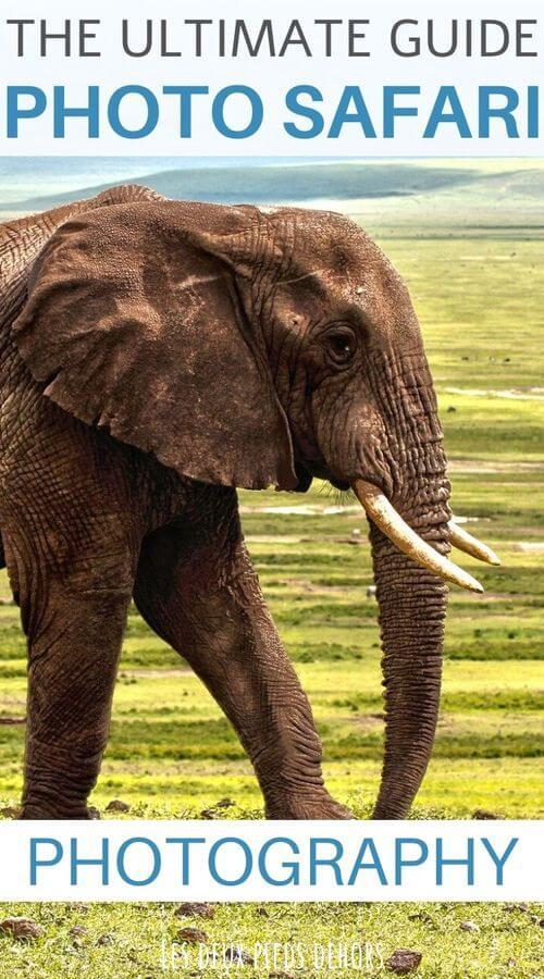 guide to a successful photo safari
