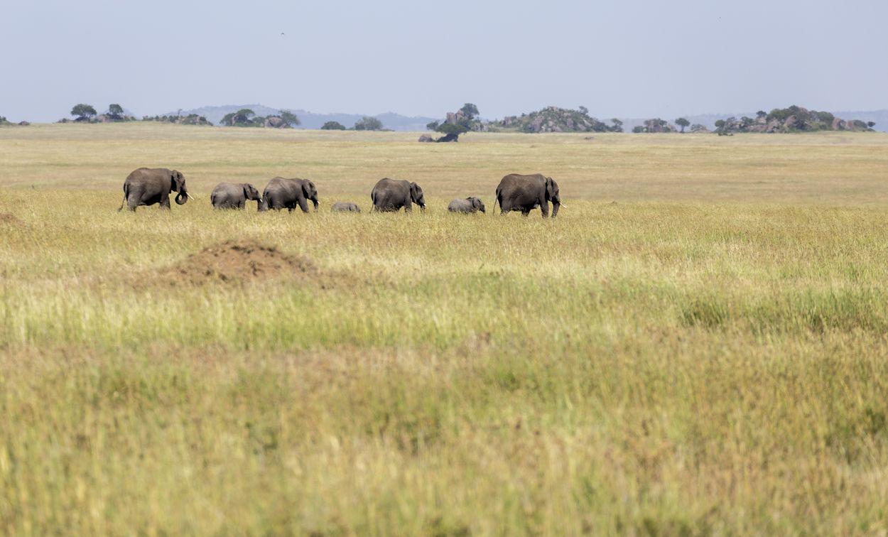 safari serengeti en Tanzanie