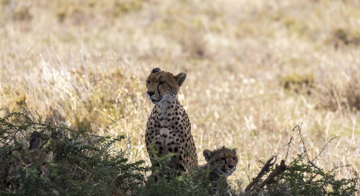 parc Serengeti en tanzanie
