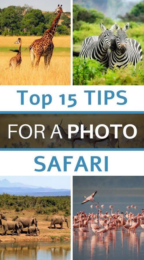 top 15 tips for a photo safari