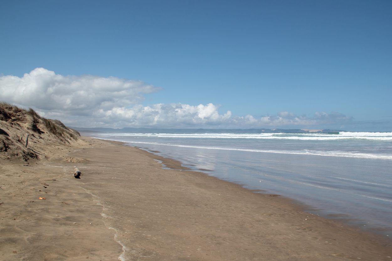 Ninety miles beach sur Le Cap reinga