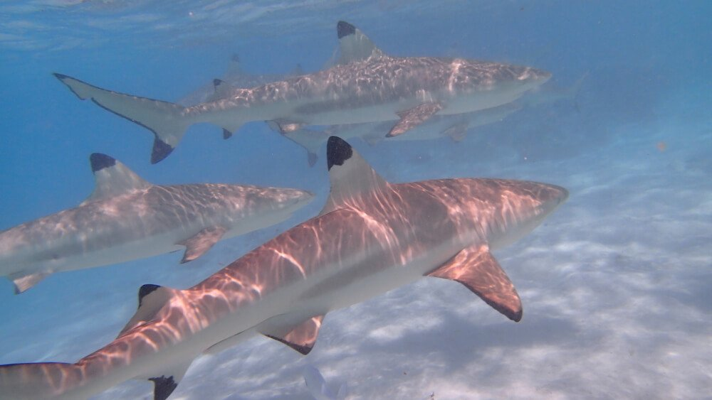 Ile de Moorea en polynésie : que faire ?