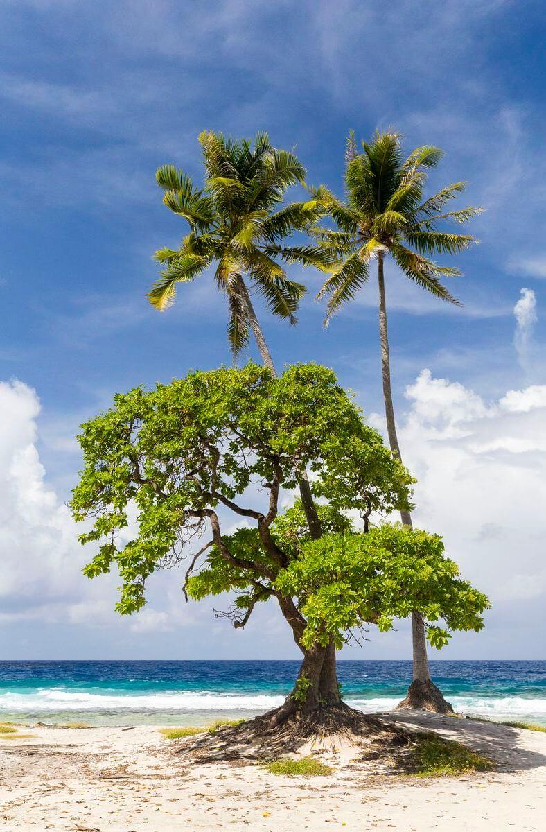 travailler à Tahiti