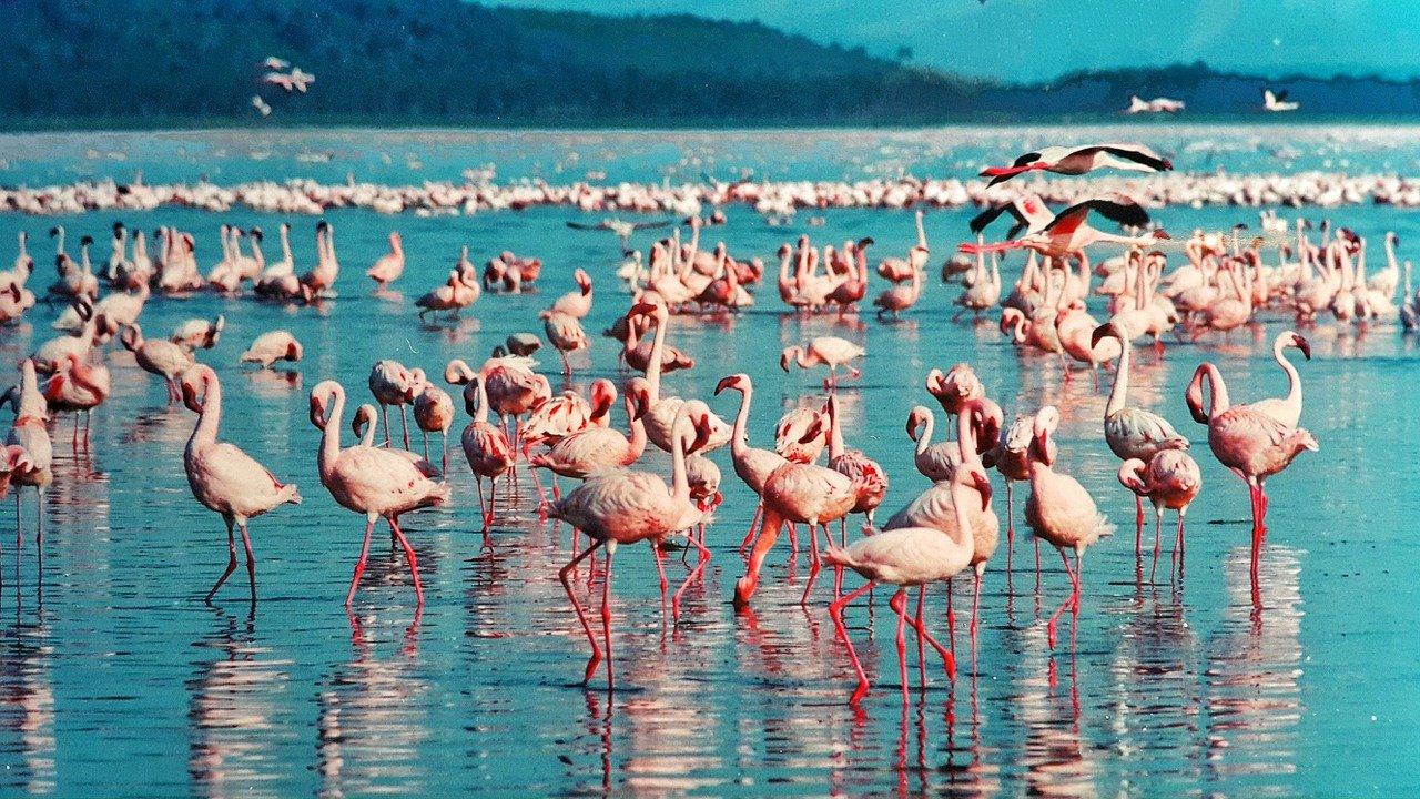 vols au départ de montpellier vers le kenya
