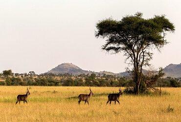 destination de voyage en afrique