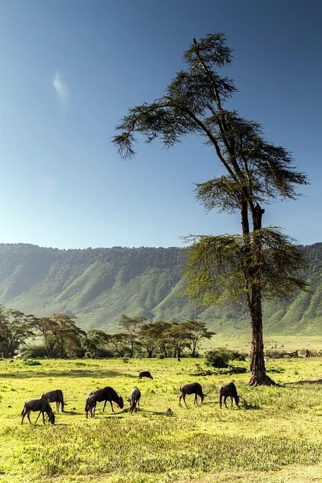 voyager en tanzanie
