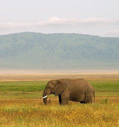 vols au départ de marseille vers la Tanzanie