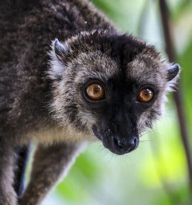 Les choses à faire sur l'île de Mayotte