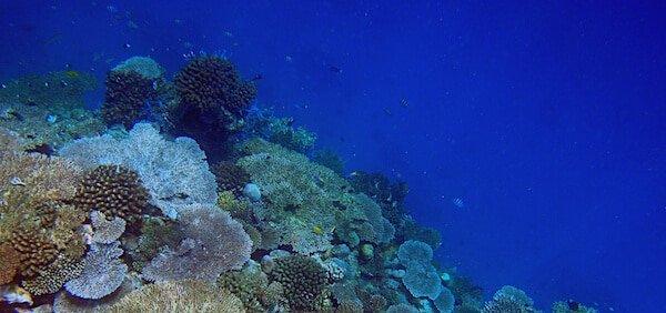 choses à faire sur l'île de Mayotte
