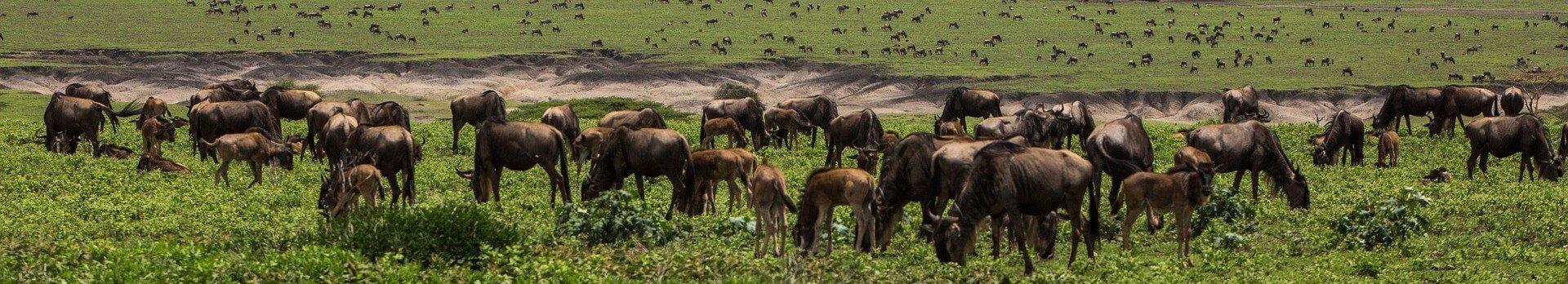 Visiter la Tanzanie