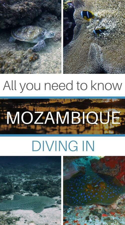Diving guide in Mozambique
