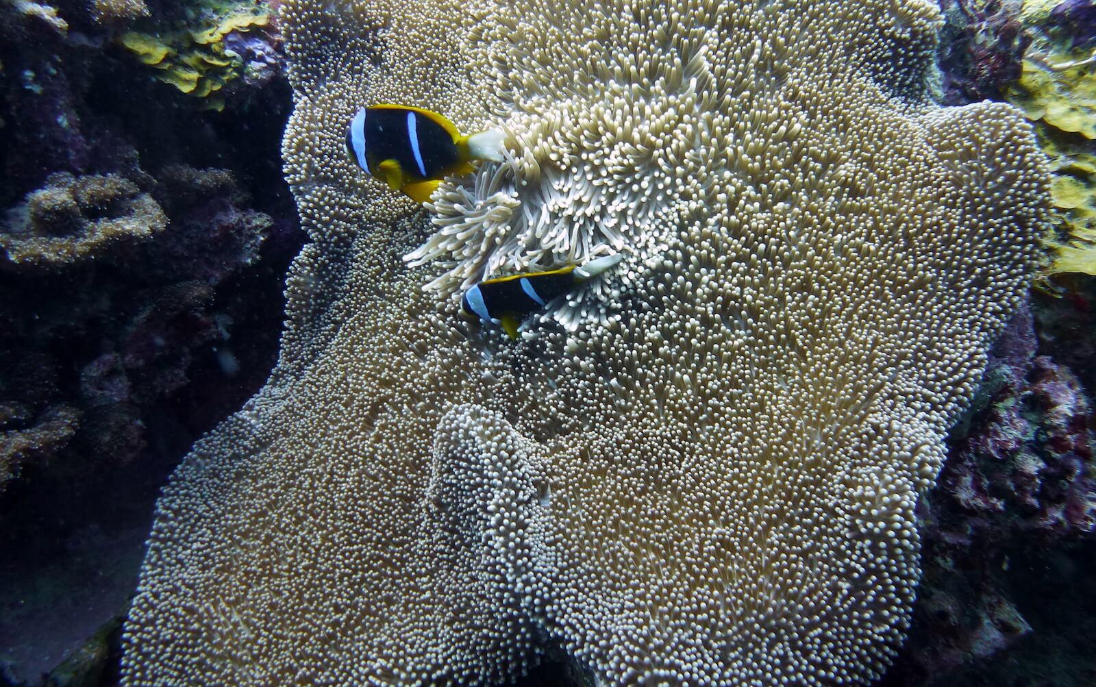 plonger au mozambique à pemba
