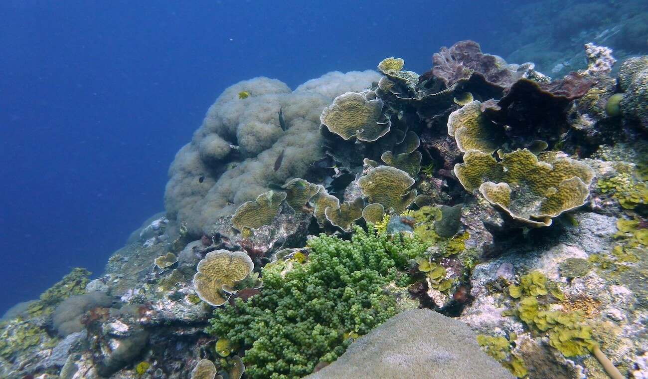 plongée à pemba au mozambique