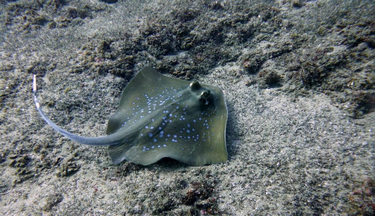 guide de plongée au mozmabique à tofo