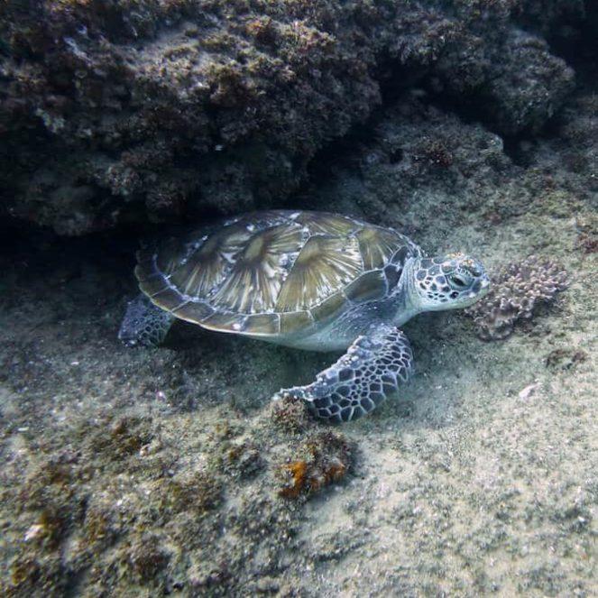 la plonger au mozambique