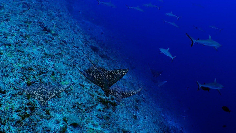 Rangiroa, un atoll de rêve en polynésie française pour les plongeurs