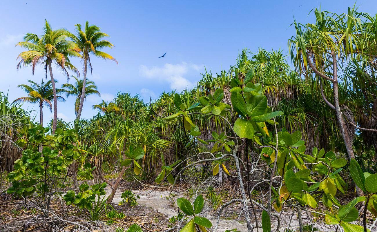 sortie tetiaroa avec poe charter, en polynésie