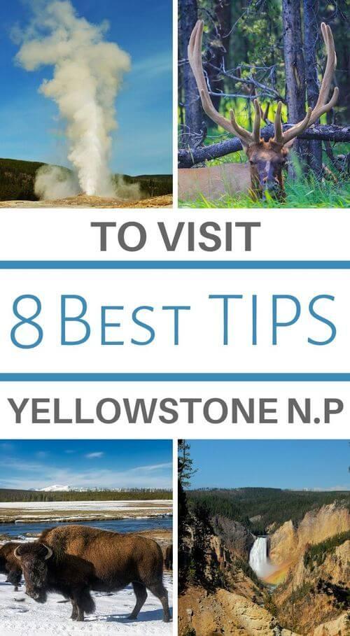vacation at yellowstone park