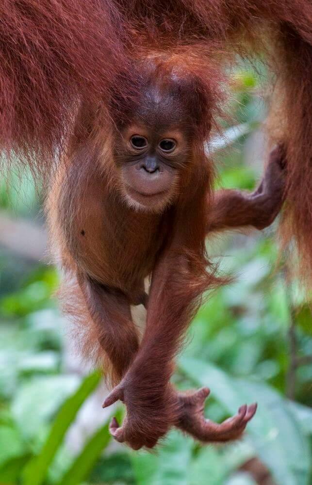 voyage indonésie sumatra asie du sud-est