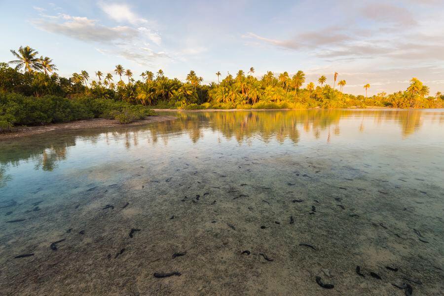 les atolls des tuamotu