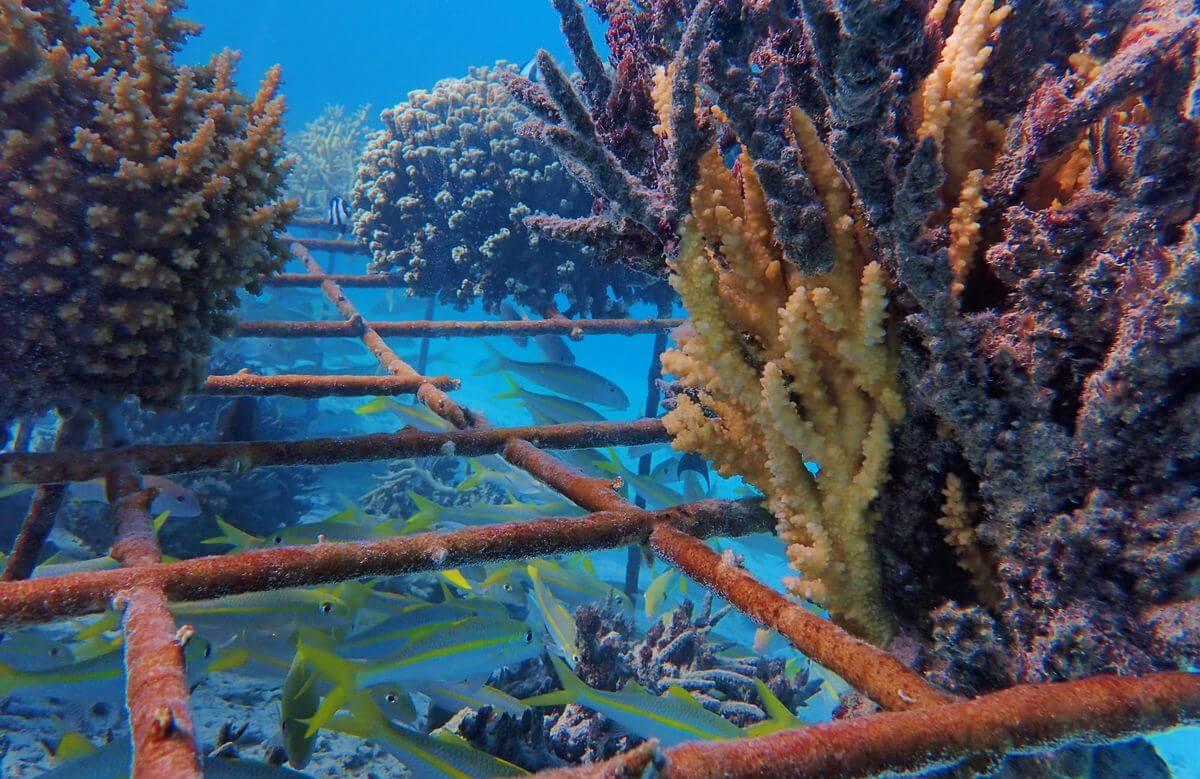 détail corail repousse maitai