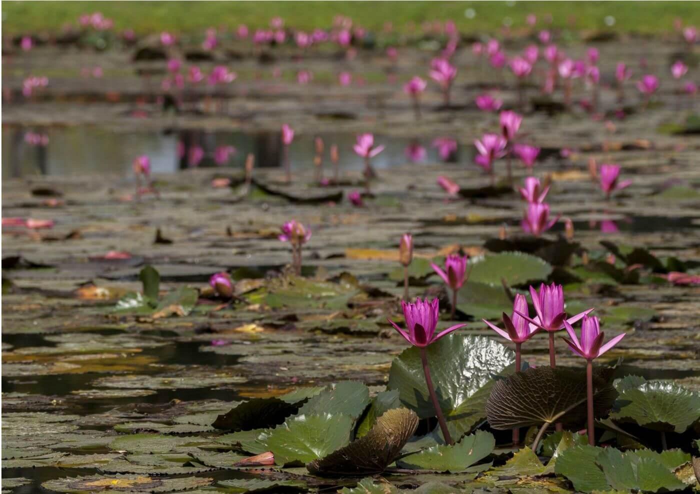 fleur et bokeh