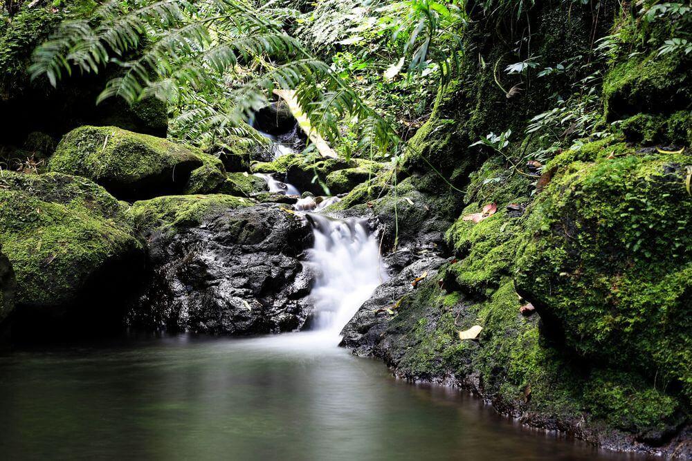 visit french polynesia and raiatea island