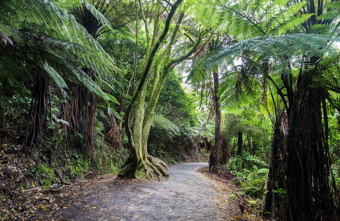 vegetation coromandel foret