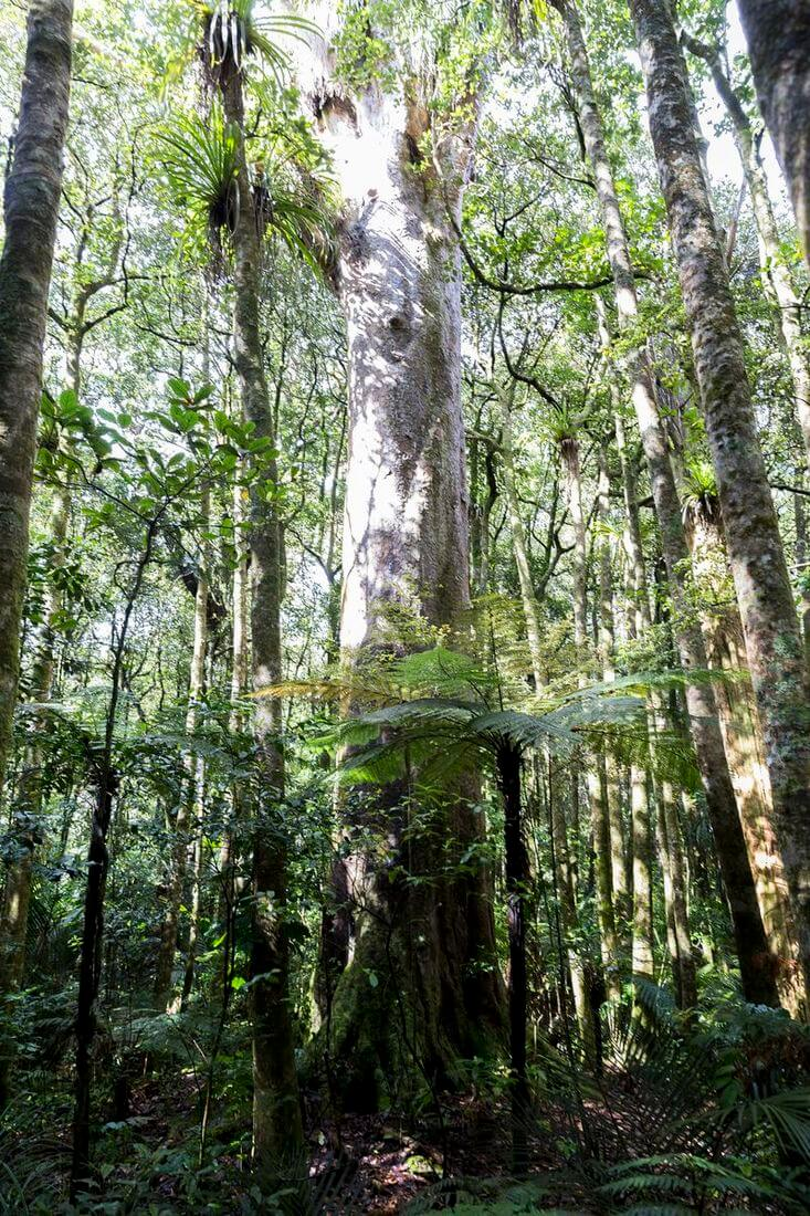 vegetation dans la peninsule du coromandel
