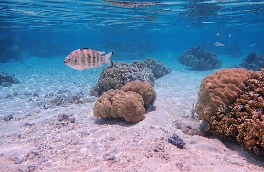 monde sous marin jardin corail de tahaa