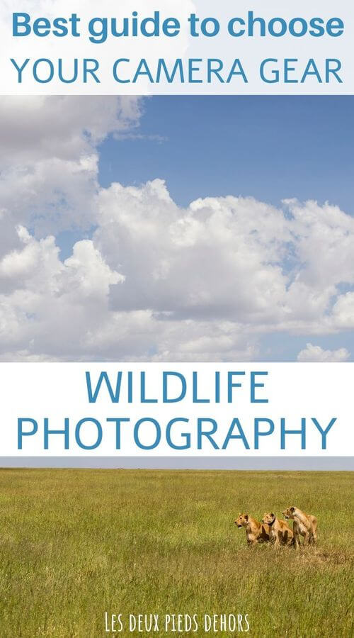 guide to choose camera gear for wildlife photography