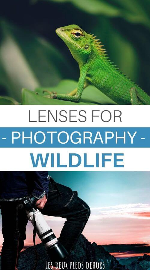 choose your lenses wildlife photography