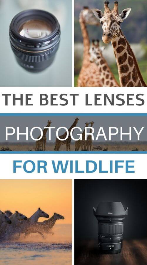 lenses for wildlife photography