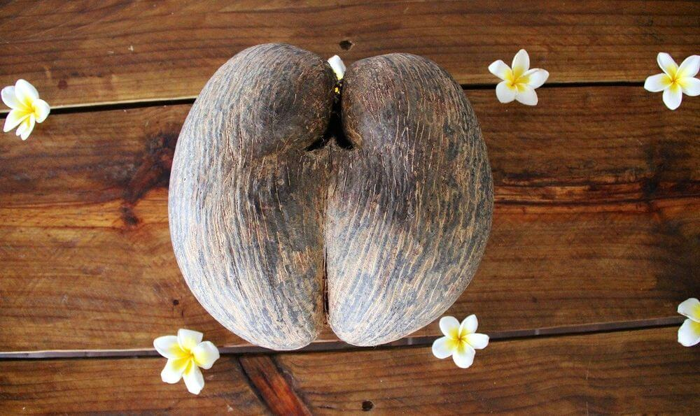 coco fesse mahé seychelles