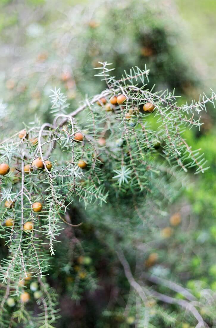 végétation mourèze
