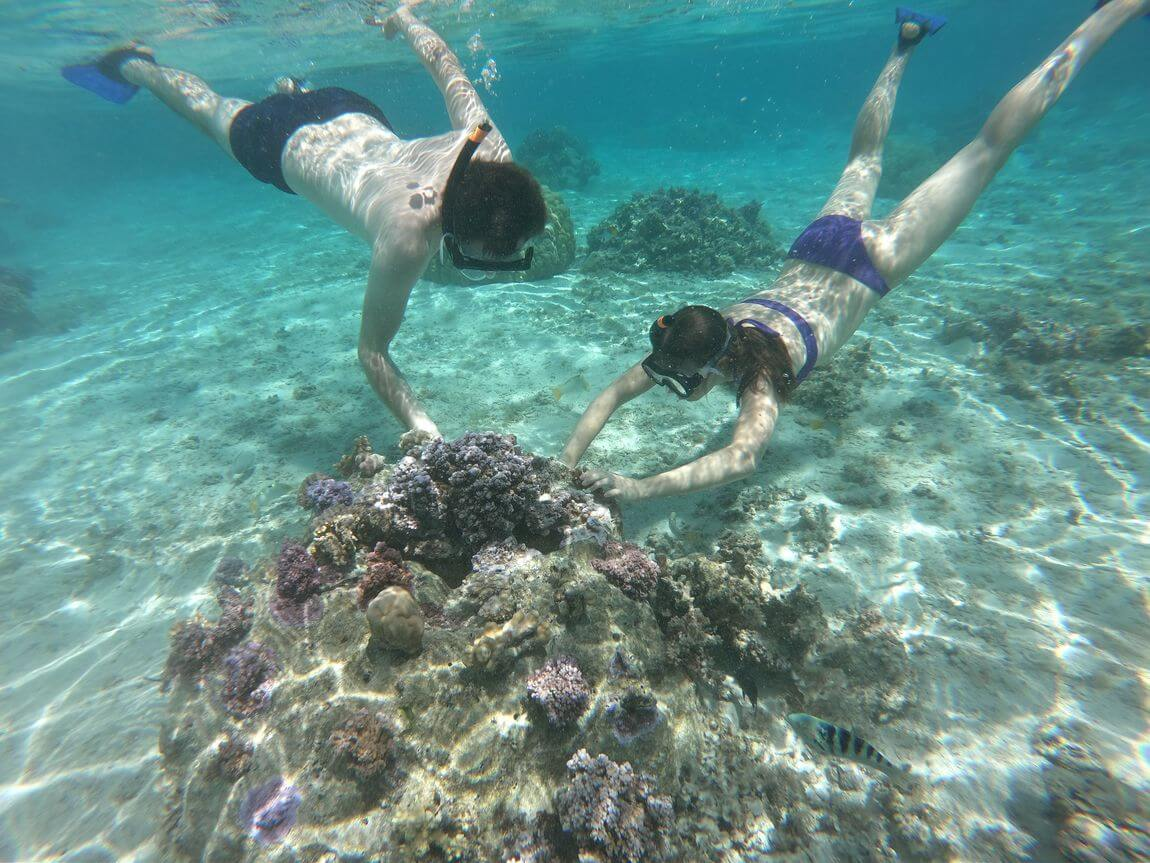 diving on corals in manava hotel