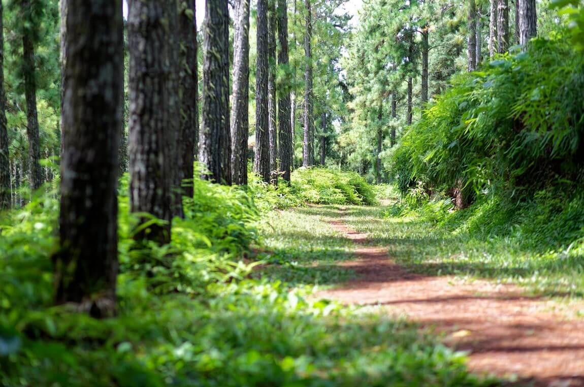 Forêt de Vaipahi