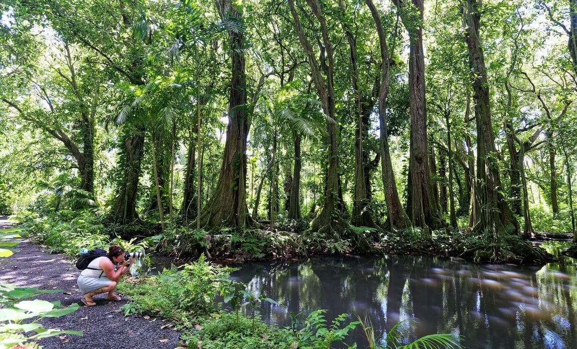 Forêt de mape Tahiti