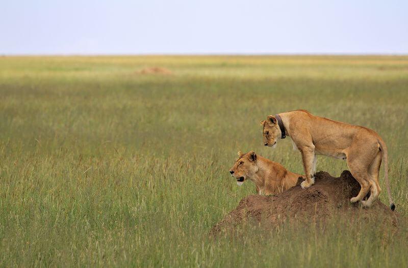 safari photography
