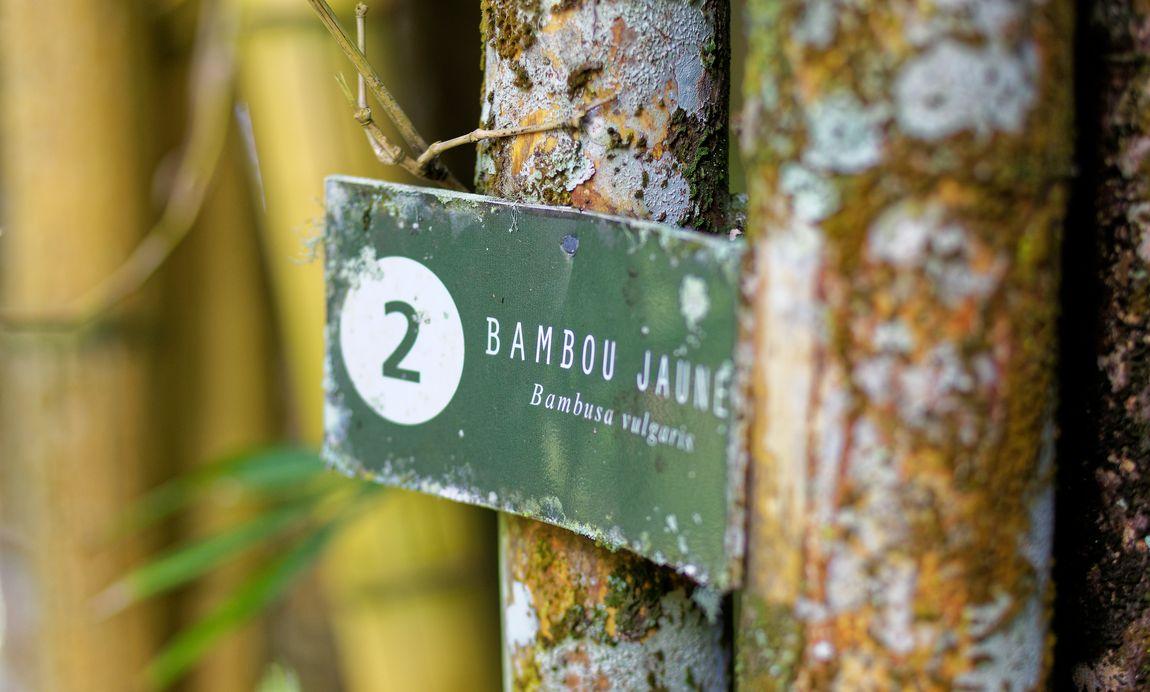 sentier balisé au jardin harrison smith