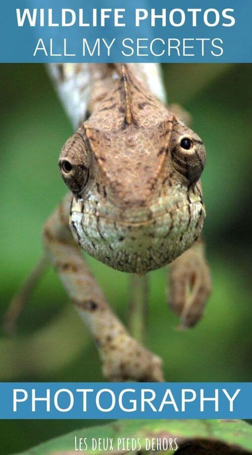 wildlife photography shots best tips