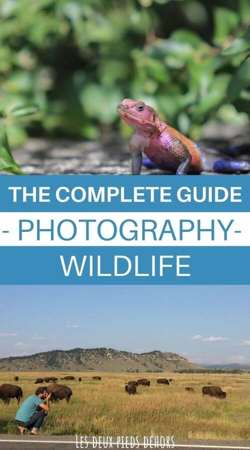 My advice for wildlife photography