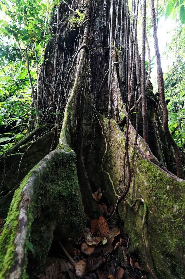 arbre chemin bassin