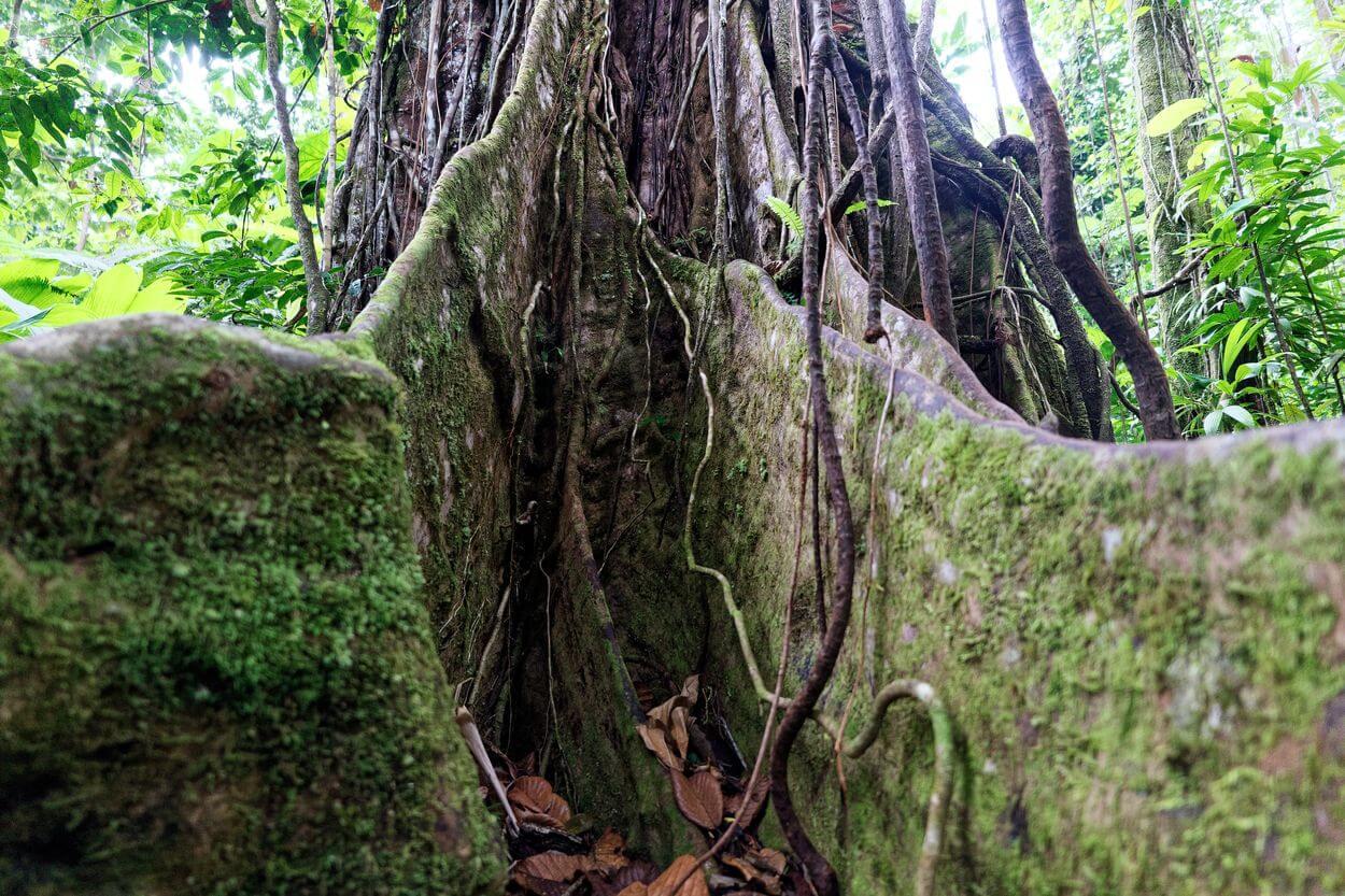 racine arbre bassin bleu