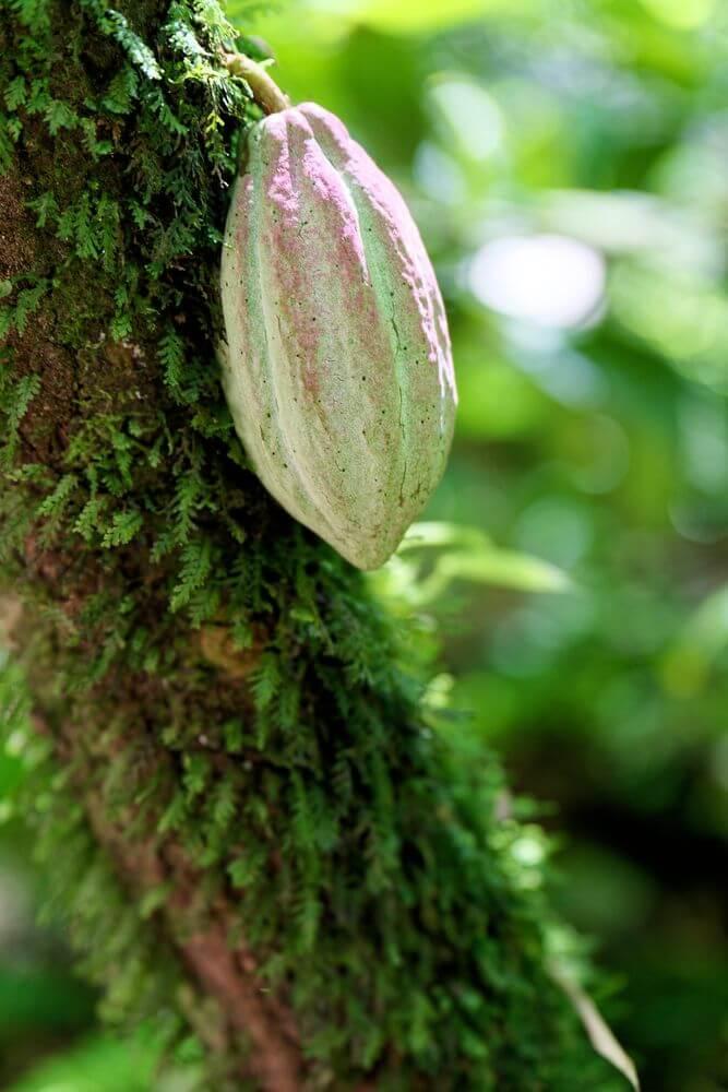 cascade du paradis cacao