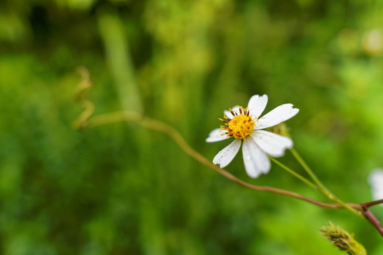 fleur randonnée bassin bleu